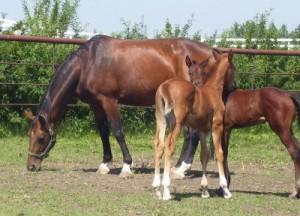 Bri-Mel Mares and Foals
